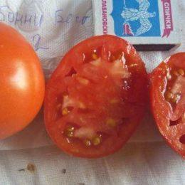 Семена томата Бонни Бест