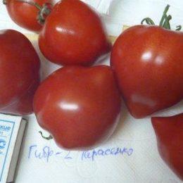 Семена томата Гибрид-2 Тарасенко