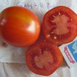 Семена томата Гибрид-3 Тарасенко