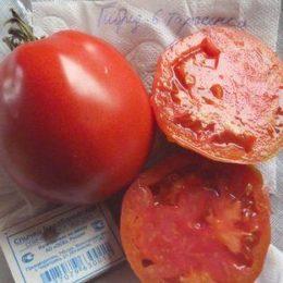 Семена томат Гибрид-6 Тарасенко