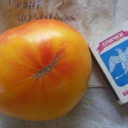 Семена томата Гигант Иерусалима