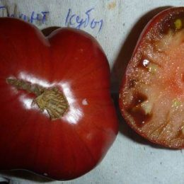 Семена томата Гигант Кубы