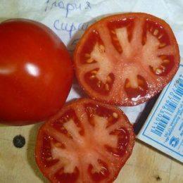 Семена томата Глория из Саратова