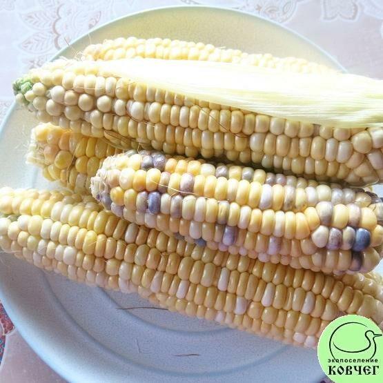 Семена кукурузы сахарной Мраморная