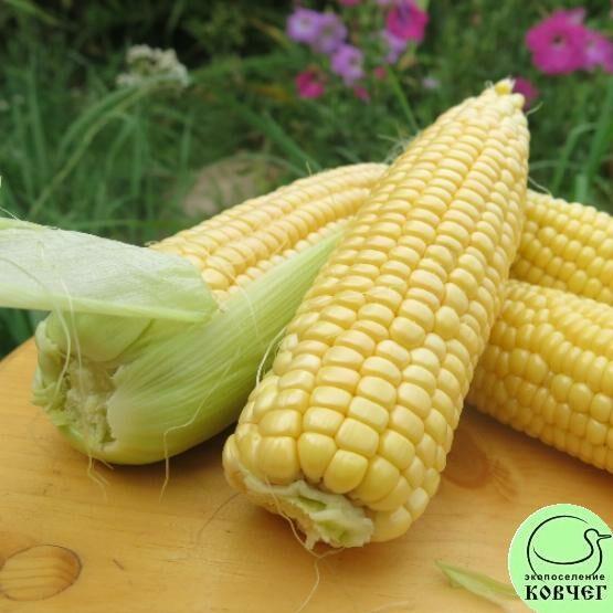 Семена кукурузы сахарной Тройная сладость