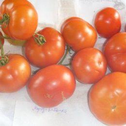 Семена томата Мороз-батюшка