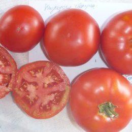 Семена томата Низкорослый сверхранний