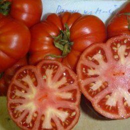 Семена томата Парень из Нью-Йорка