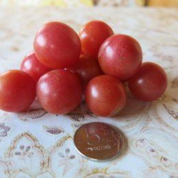 Семена томата ампельного Розовый жемчуг