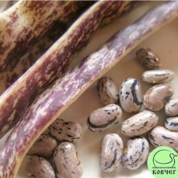 Семена фасоли спаржевой Чудо Пьемонта