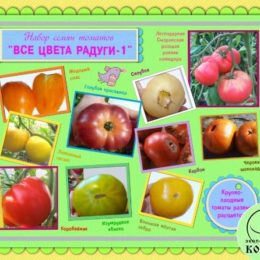 Набор семян томатов  «ВСЕ ЦВЕТА РАДУГИ-1»: разноцветные крупноплодные томаты
