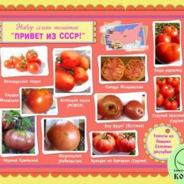 Набор семян томатов «ПРИВЕТ ИЗ СССР!»: лучшие сорта томатов из бывших Союзных республик