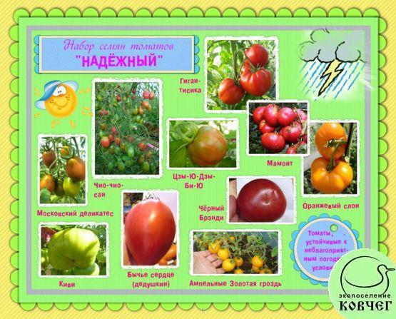Набор семян томатов «НАДЁЖНЫЙ»: томаты, устойчивые к неблагоприятным погодным условиям