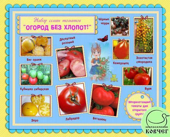 Набор семян томатов «ОГОРОД БЕЗ ХЛОПОТ»: самые неприхотливые томаты для открытого грунта