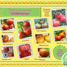Набор семян томатов «СУПЕРГИГАНТ»: самые крупные томаты