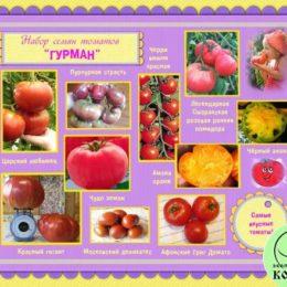 Набор семян томатов «ГУРМАН»: самые вкусные томаты