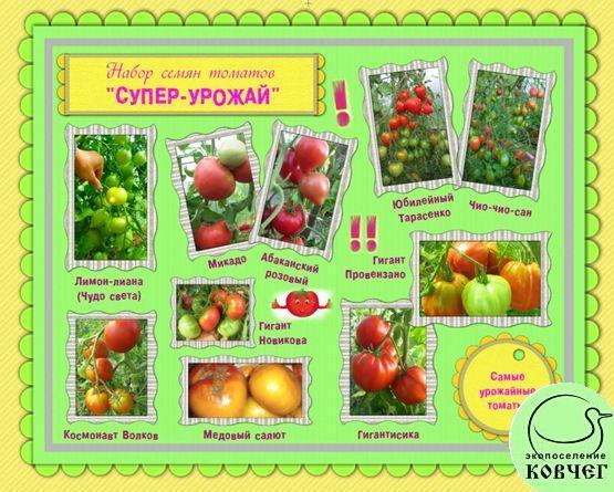 Набор семян томатов «СУПЕР-УРОЖАЙ»: самые урожайные сорта томатов