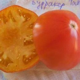 Семена томата Бурракер Фаворит