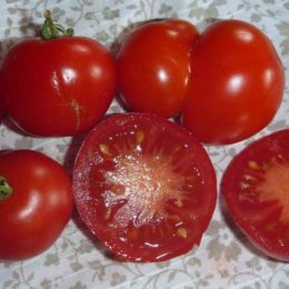 Семена томата М-279