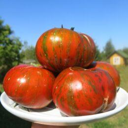 Семена томата Шоколад Страйпс