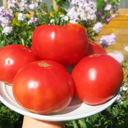 Семена томата Белорусский розовый