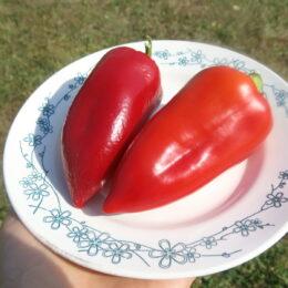 Семена перца сладкого Винни-пух (от Юли)
