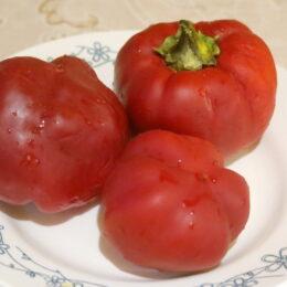 Семена перца сладкого Радонеж (от Юли)
