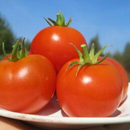 Семена томата Волгоградский скороспелый 323 (от Юли)