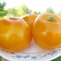 Семена томата Золотистый №148