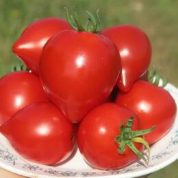 Семена томата Юбилейный Тарасенко