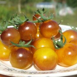 Семена томата Золотые ягоды