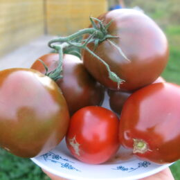 Семена томата Чёрный трюфель японский
