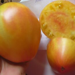 Семена томата Бабушки Виней жёлто-розовый