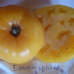Семена томата Белая Красавица