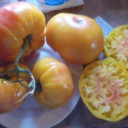 Семена томата Вирджиния Сладости