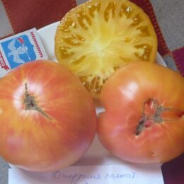 Семена томата Джорджия Полосатая