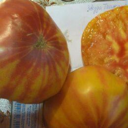 Семена томата Звезда Ташкента