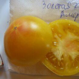 Семена томата Золотая Королева Америки