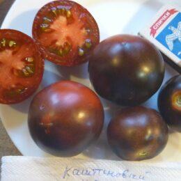 Семена томаты Каштановый Шоколадный