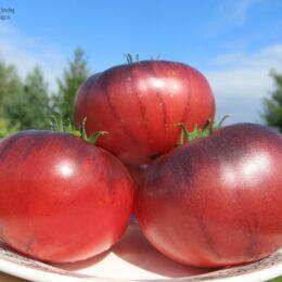 Семена томата Гигант лазурный (Blue Giant)