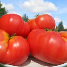 Семена томата Гигант Черноморский