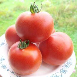Семена томата Красный вельвет