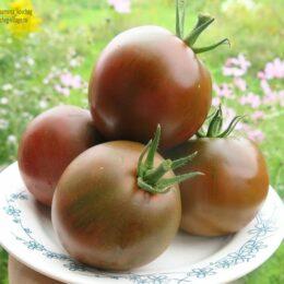 Семена томата Чёрная лакомка