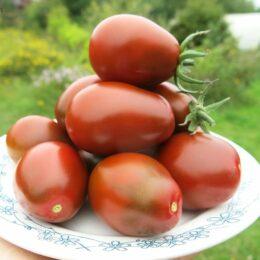 Семена томата Чернослив
