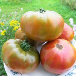 Семена томата Чёрный ананас