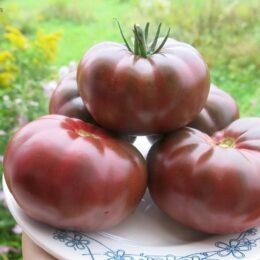 Семена томата Чёрный Крым