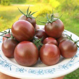 Семена томата Чёрный шоколад черри