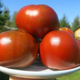 Семена томата Чероки шоколад