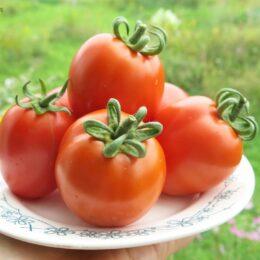 Семена томата Чудо лентяя