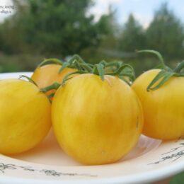 Семена томата Белый мохнатый кабан (White furry Boar)